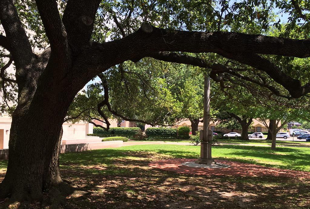 pole_and_tree