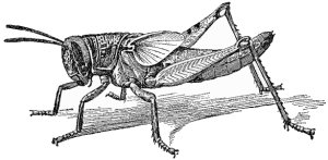 Four-Legged Insects and the Genesis Flood