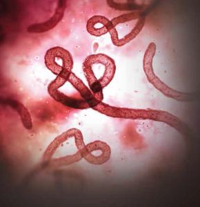 Healing-worms Screen Shot 2015-04-21 at 11.43.39 AM