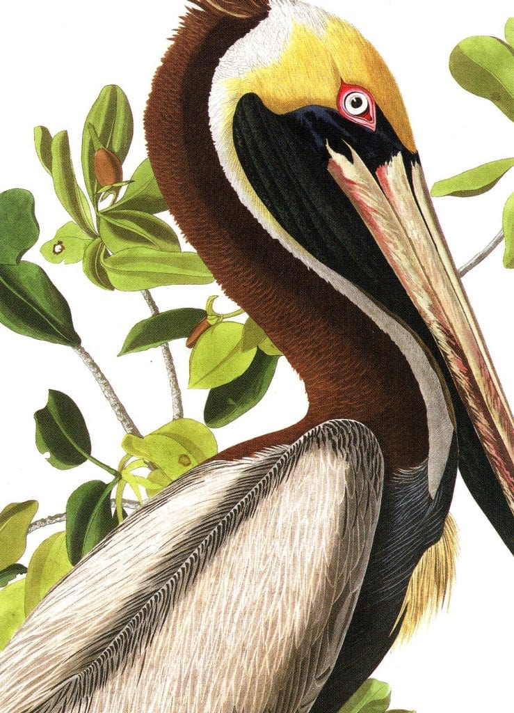Audubon exhibit at Baylor's Martin Museum kicks off a season of change