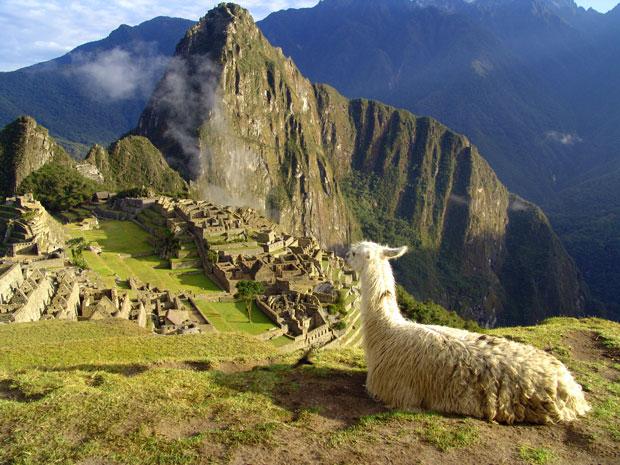 Peru_llama_post_620