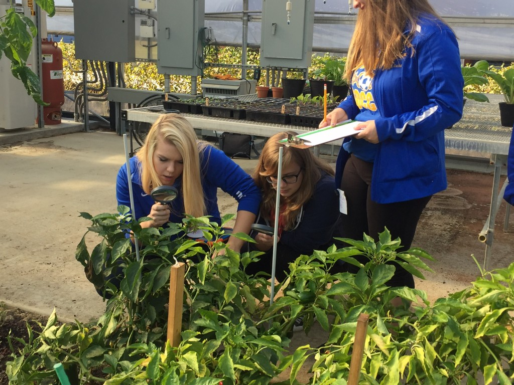 Hampton High School students look for and document evidence of pests in the solar high tunnel at Eden Hall.