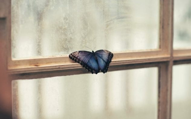 Image of butterfly on window sill.
