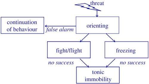 Fear response model.