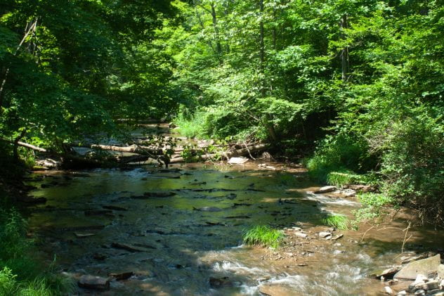 Shallow creek surrounded by green trees