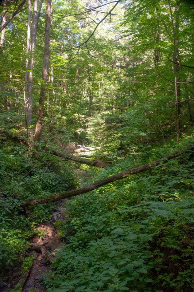 Dense forest surrounded by greenery and trees with fallen trees in the center of the photo.