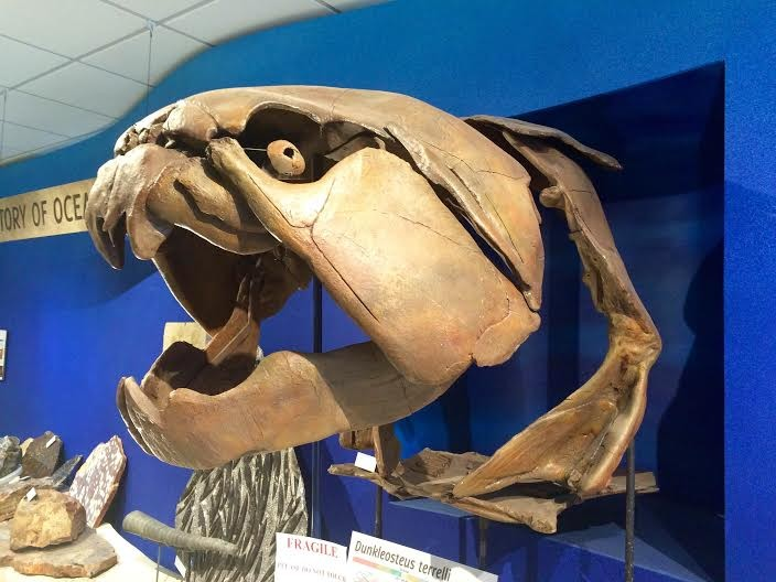 A large Dunkleosteus terrelli cast welcomes visitors to the museum.