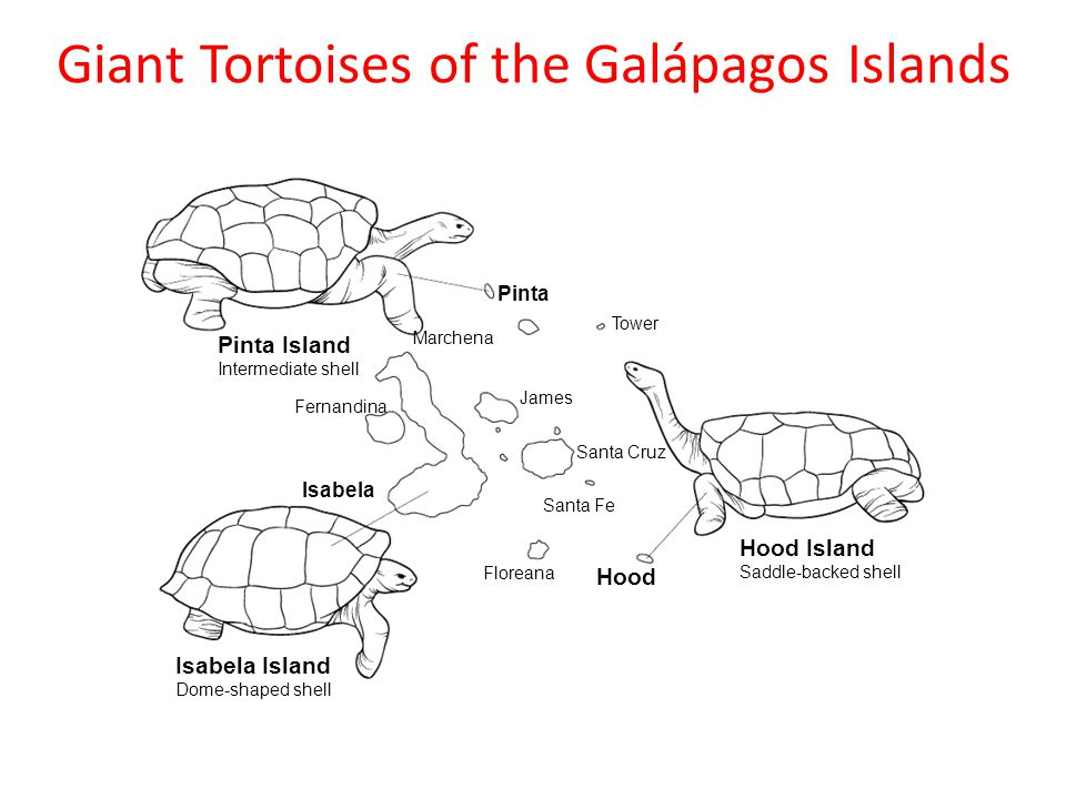 The tortoise shells varied from island to island. Image source.