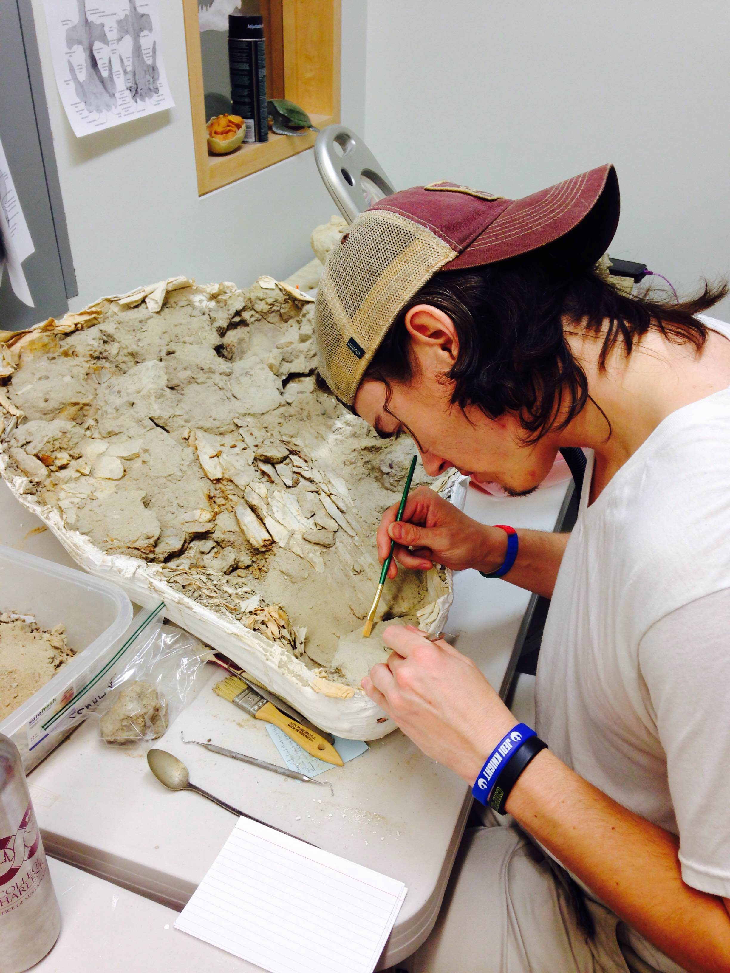 Brad working on his mysticete braincase. Photo by R. Boessenecker.
