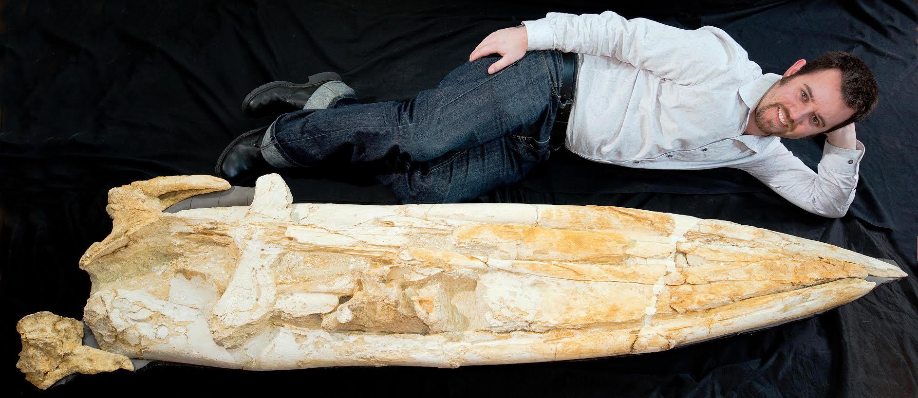Waharoa fossil baleen whale and RW Boessenecker, Geology Museum, University of Otago