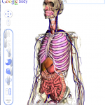 Google Body Browser showing the skeleton and organs and the layers controller