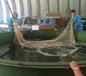 Class Field trip to Swimming Rock Fish farm