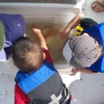 Children exploring fish, shrimp, and sponges netted (and released) during our tour.