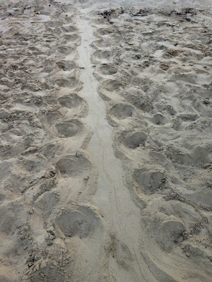 Sandy turtle tracks