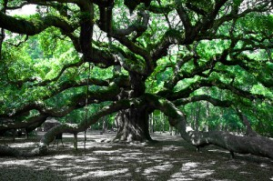 Angel Oak - The oldest thing east of the Rockies.