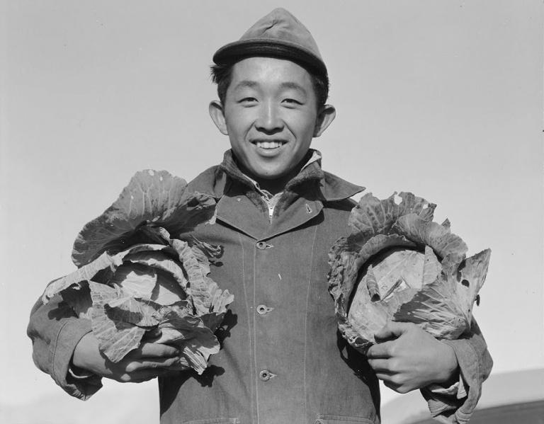 Ansel Adams, Richard Kobayashi, farmer with cabbages. Manzanar Relocation Center, 19. Courtesy of Library of Congress