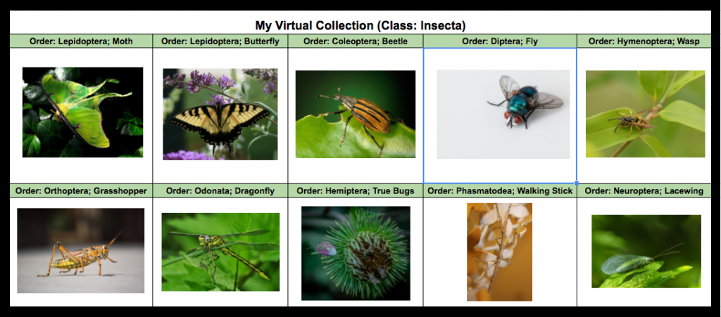 virtual insect collection