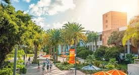 UM's campus is dotted with relaxed outdoor spots for social studying and collaboration. University of Miami.