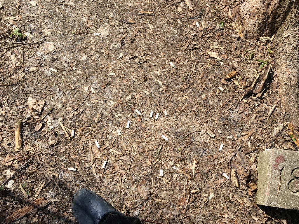 Cigarette butts in Dunn Woods