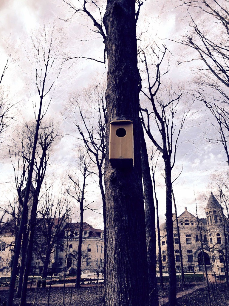 Owl House in Dunn Woods