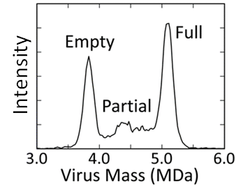 Line graph showing peaks at ~3.8 and 5 megadaltons for the mass of the virus capsid