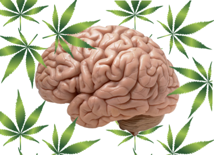 Image of the brain surrounded by marijuana leaves