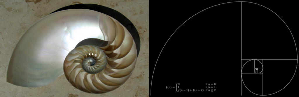 On the left is a nautlis shell showing an inward spiral. On the right is a similarly-shaped Fibonacci spiral, created by drawing circular arcs between the corners of tiled squares.