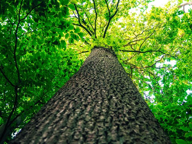 a tree shown from an extreme low angle