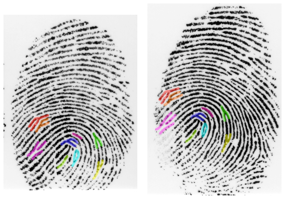 Blood, sweat and fingerprints: the science behind crime scene