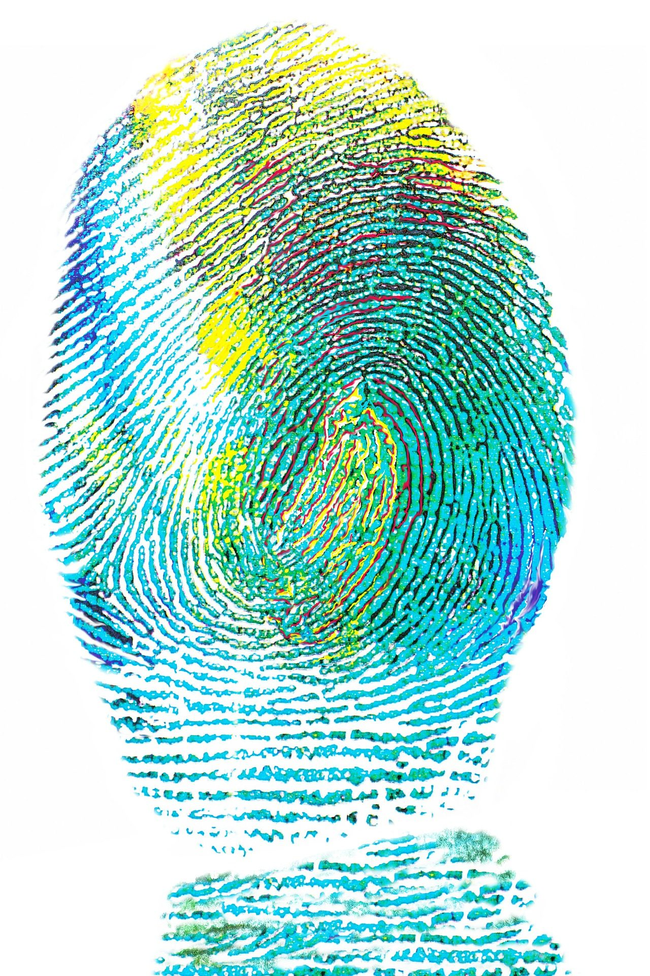 Fingerprint in blue and green pigment on a white background.