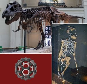 Dinosaur skeleton, neanderthal skeleton, and model of a chemical structure