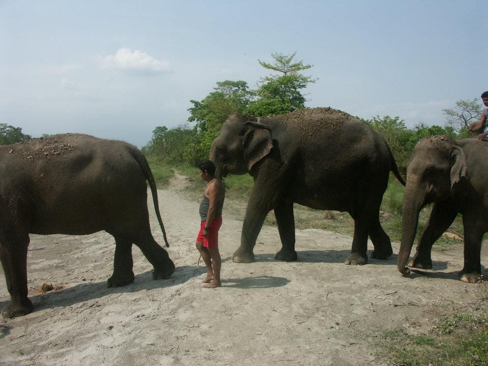An animal caretaker accompanies three adult female elephants into the river for bath time at Chitwan National Park in Nepal.