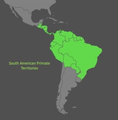 A map highlighting primate habitats in South America including Brazil, Bolivia, Peru, Ecuador, Colombia, Venezuela, Guyana, Suriname, French Guiana, Panama, Costa Rica, Nicaragua, Honduras, El Salvador, Guatemala, and Belize.