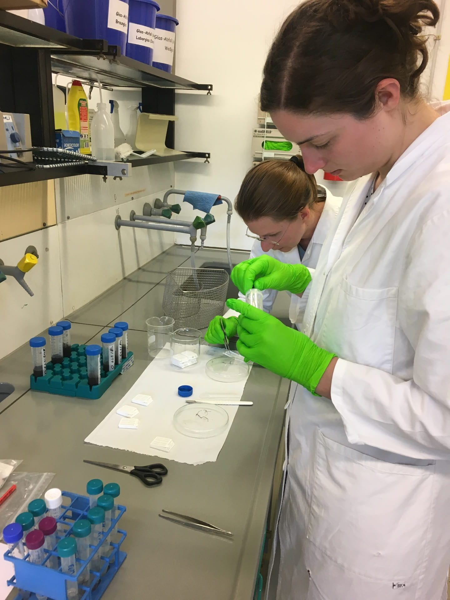 Two scientists working at the lab bench, preparing fungal tissues for staining.