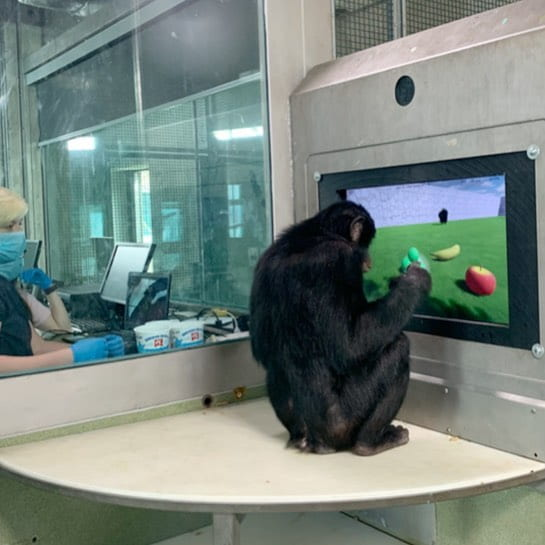 Teco is pictured working on a research project on a touchscreen.