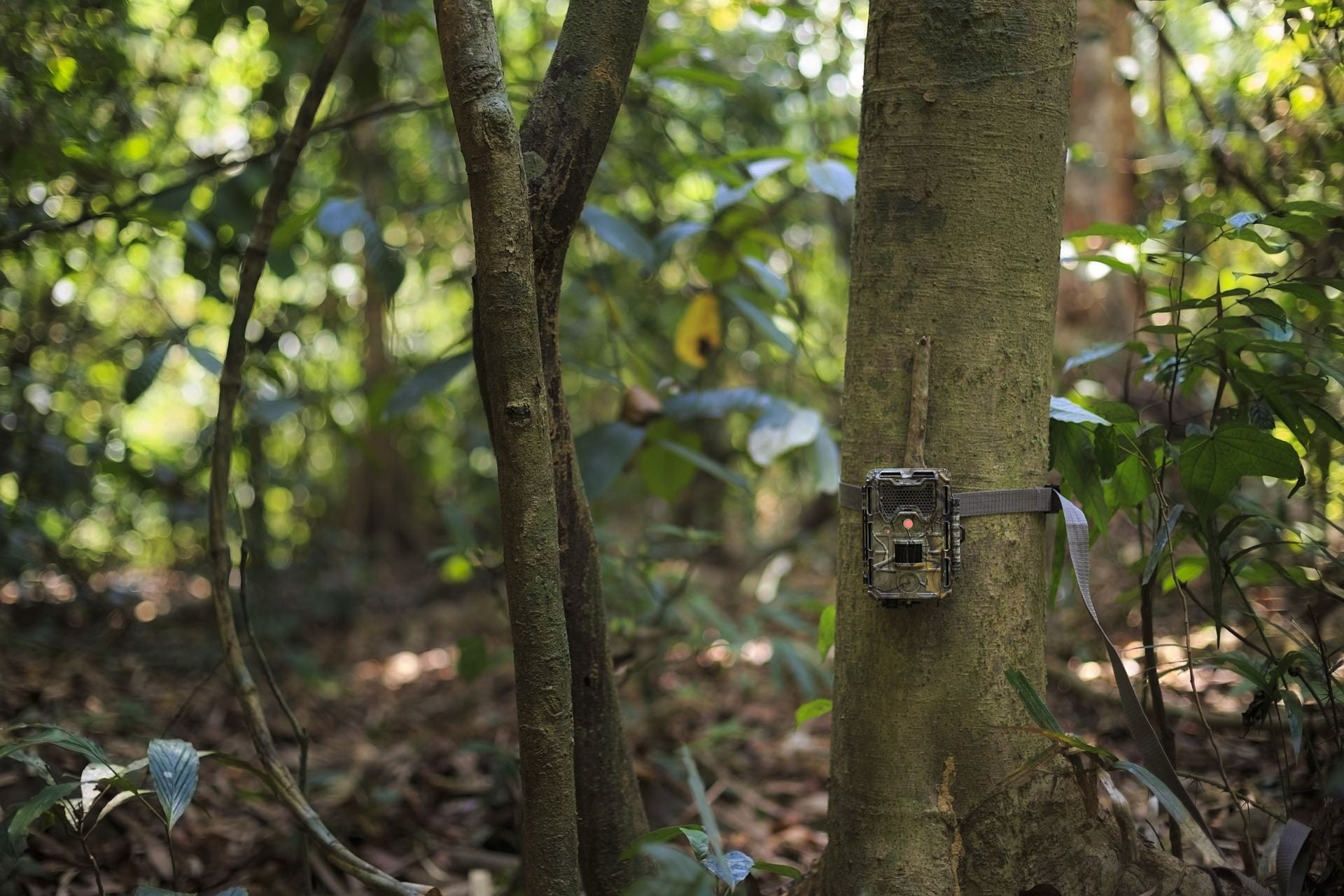 Pictured is a camera trap attached to a tree in a forest. Even using camera traps for observational research on wildlife requires approval from IACUC.
