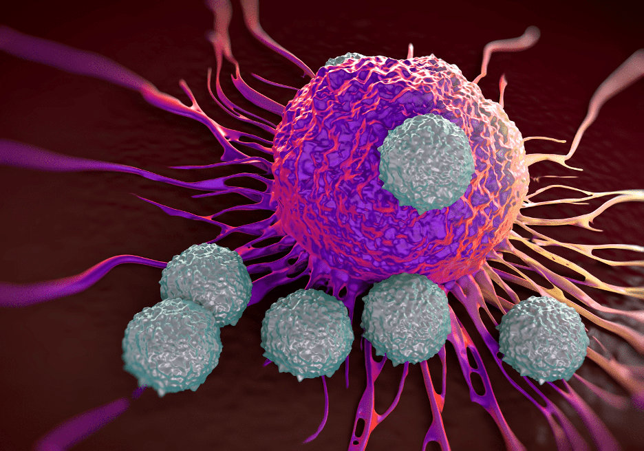 [T- cells attacking a cancer cell (Illustration of an electron microscopy photo). Source: royaltystockphoto.com/Shutterstock.]
