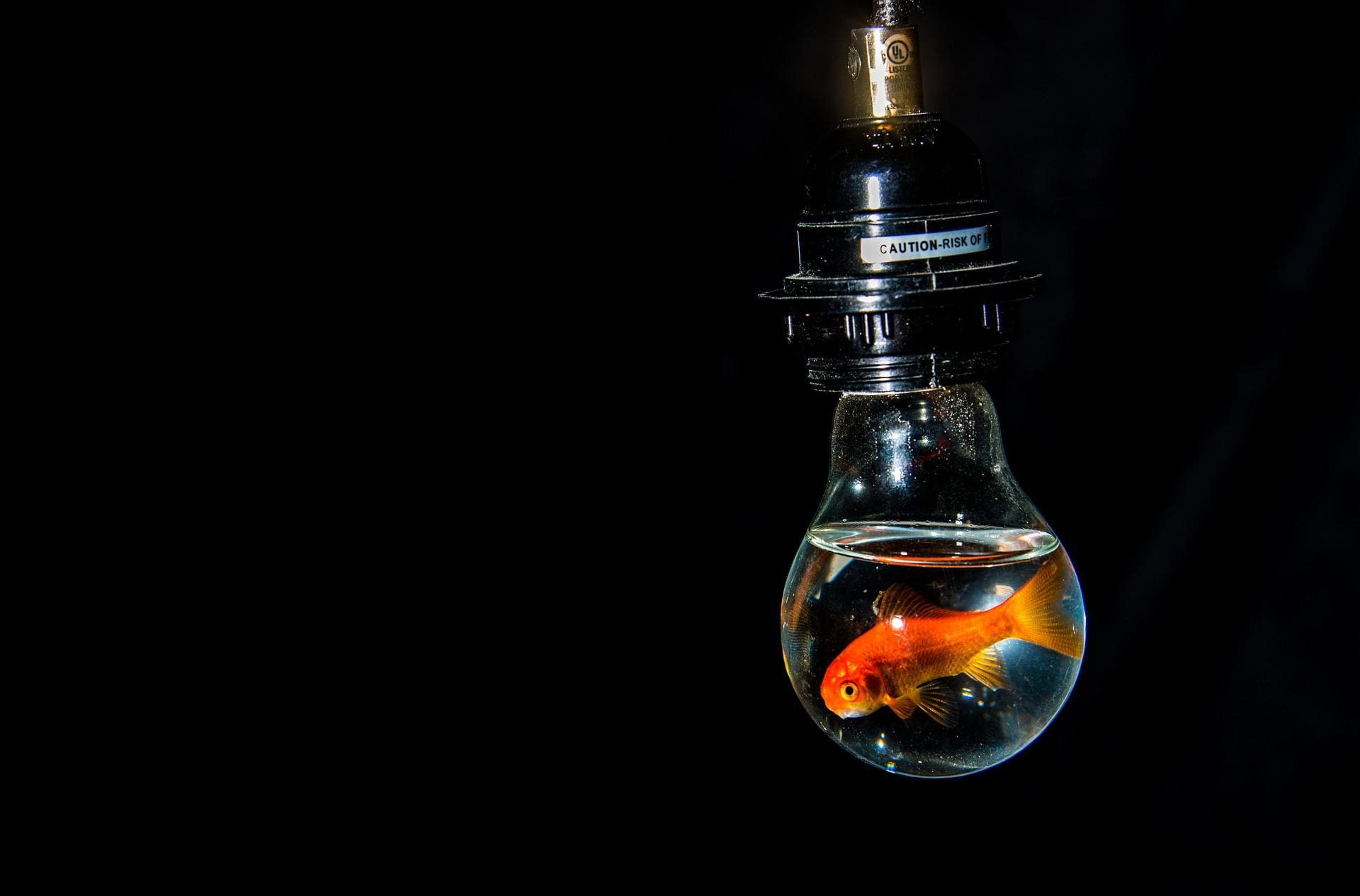 [A goldfish is trapped in a transparent light bulb filled with water.]