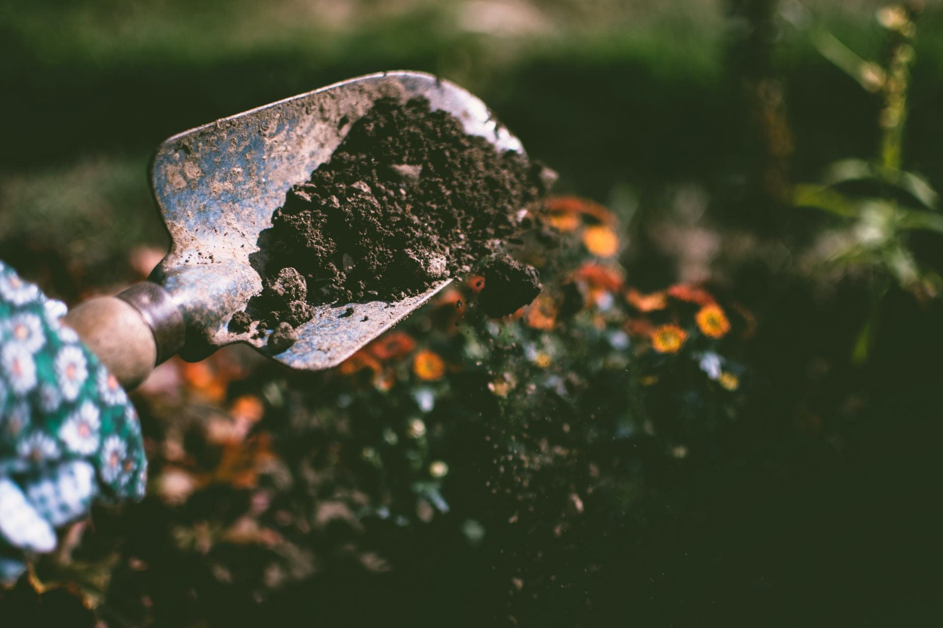 A photo of a shovel dropping seeds and soil in a garden with flourishing plants in the background.