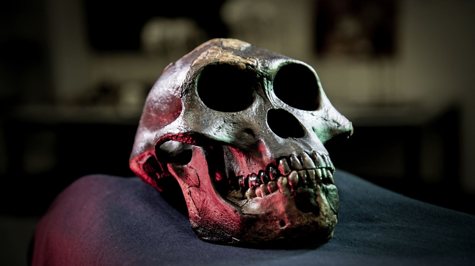 A cast of Lucy's skull sits on a soft surface in a lab.