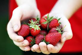 kids and berries