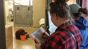 Students in the Psychology of Giving class observe and take notes on primate behavior.