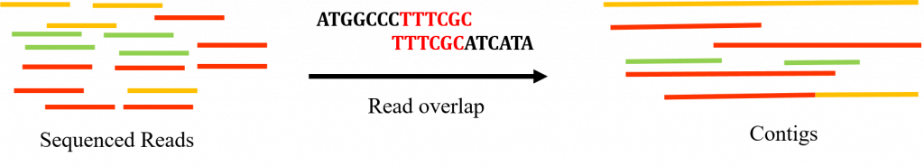 Diagram showing unsorted reads being converted into contigs based on read overlap