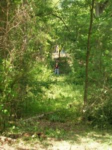 Mapping through dense vegetation, 2007.