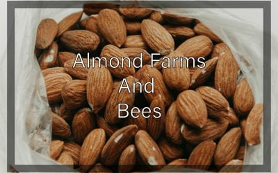 Weekly Beesearch: Almonds are Killing the Bees