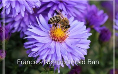 Weekly Beesearch: France's Neonicotinoid Ban