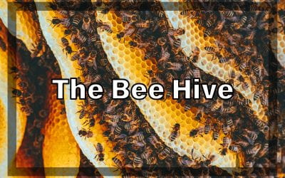 Weekly Beesearch: What's In a Beehive?