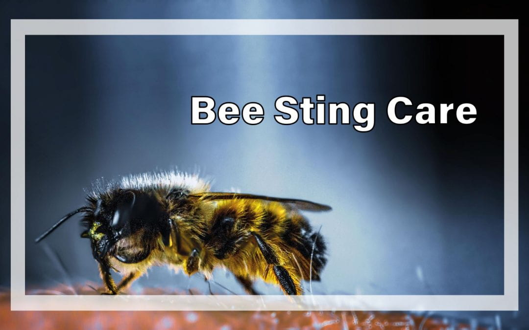 Weekly Beesearch: Bee Stings