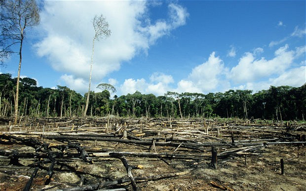 deforestation brings about more harm than Deforestation, clearance, or clearing is the removal of a forest or stand of trees  where the land is thereafter converted to a non-forest use examples of  deforestation include conversion of forestland to farms, ranches, or urban use  the most concentrated deforestation occurs in tropical rainforests  due to  deforestation, the removal of trees causes sloped lands to be more.