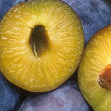 GMO-226x226